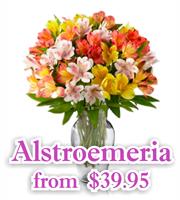 Alstromeria