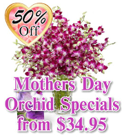 Orchid Specials