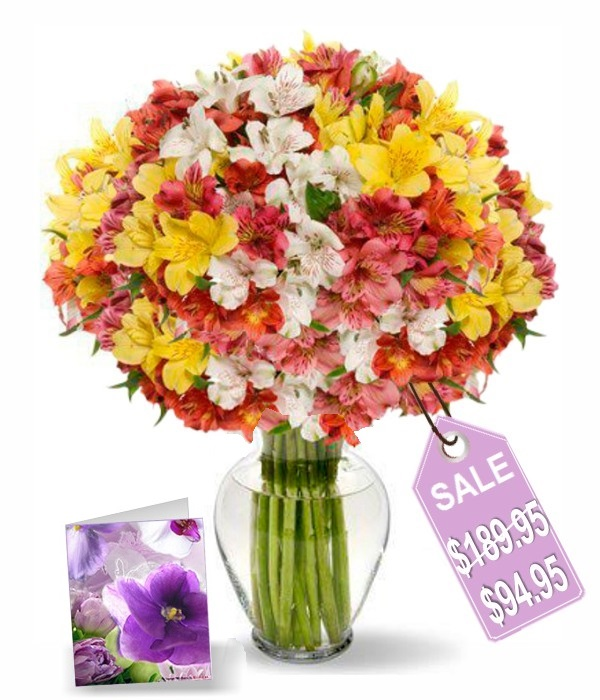 200 Blooms of Alstromeria