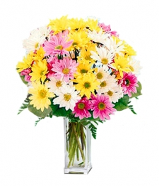 Classic Assorted Colour Daisy Bouquet