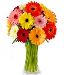 20 Assorted Gerberas