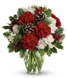12 Christmas Carnations