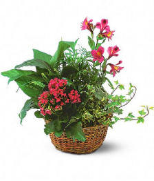 10`` Planter Basket