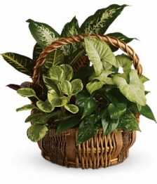 8`` Planter Basket
