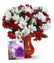 Holiday Alstroemeria, Vase & Card