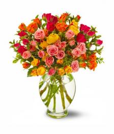 50 Spray Rose Special I