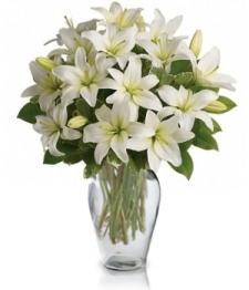 White Lily Serenity