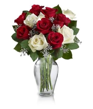 12 Christmas Roses