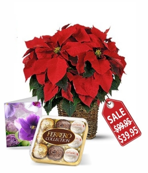 Poinsettia, Card & Ferrero