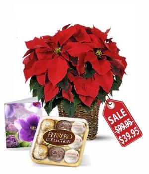Poinsettia, Card & Ferrero
