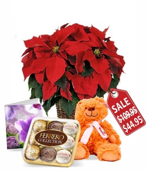 Poinsettia, Card, Teddy & Ferrero