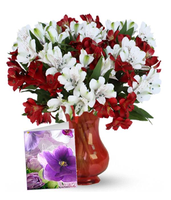 Holiday Alstroemeria, Vase & Card