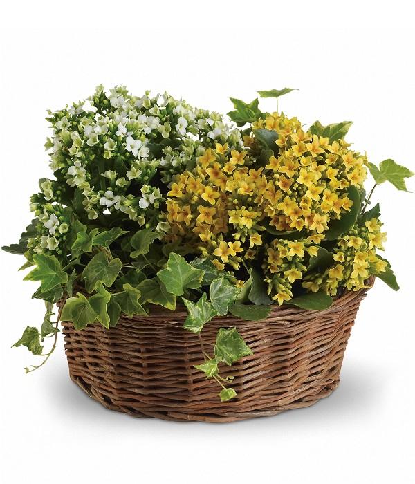 12`` Planter Basket