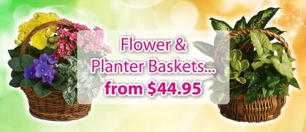 Flowers and Gift Hampers - Florist Australia | Flower